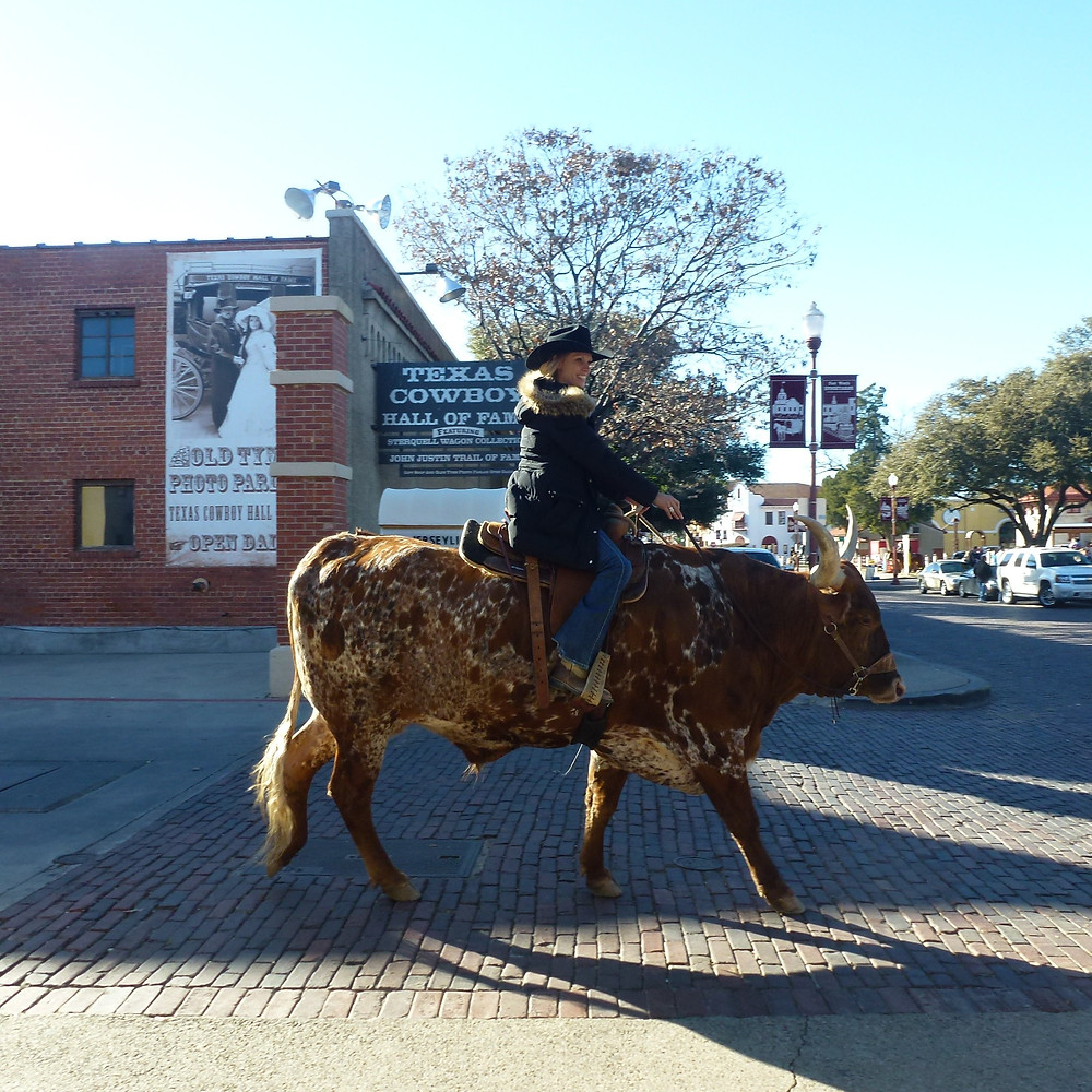 Riding a longhorn
