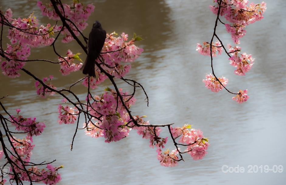 Bird on a Twig