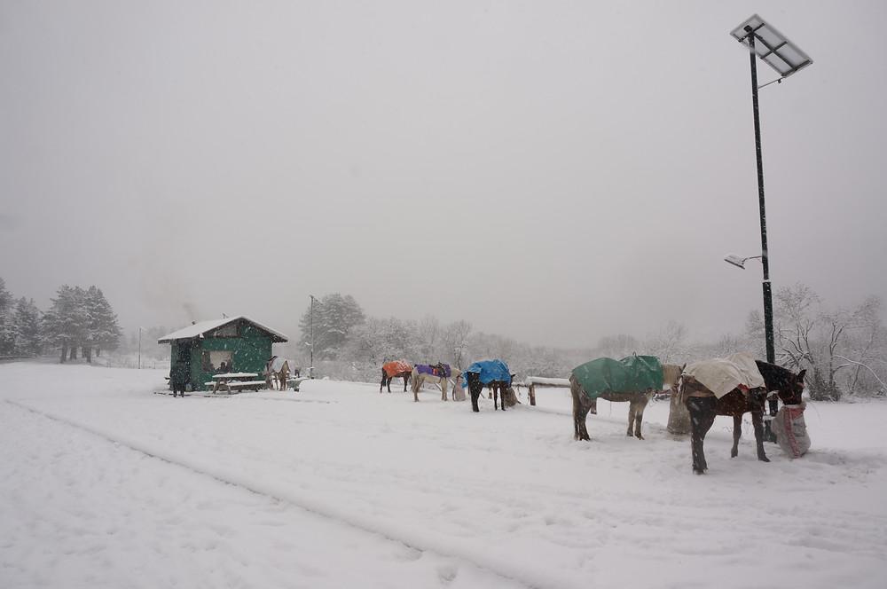 Horses, Abant under snow, Bolu, Turkey
