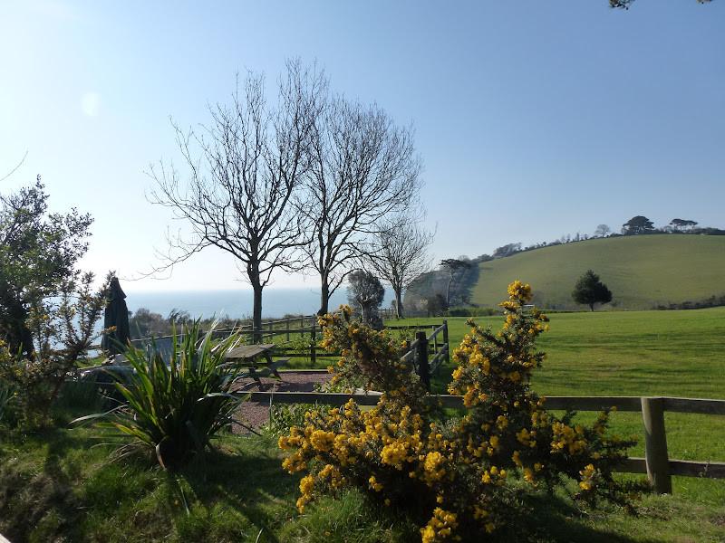 Devon High Cliffs