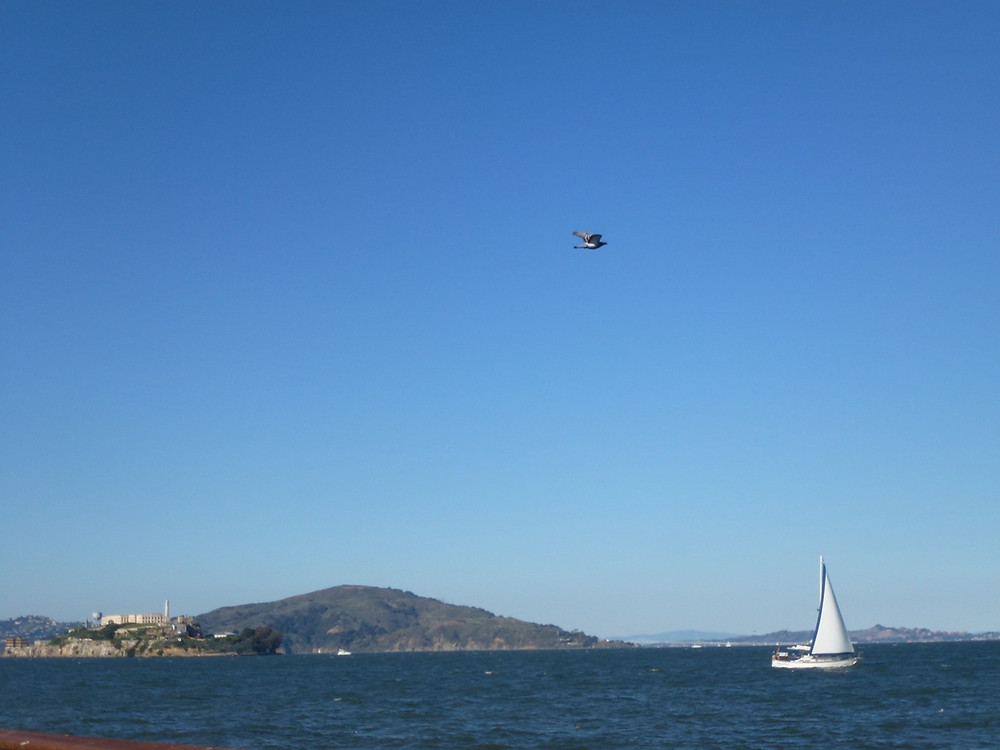 Sailboat by Alcatraz