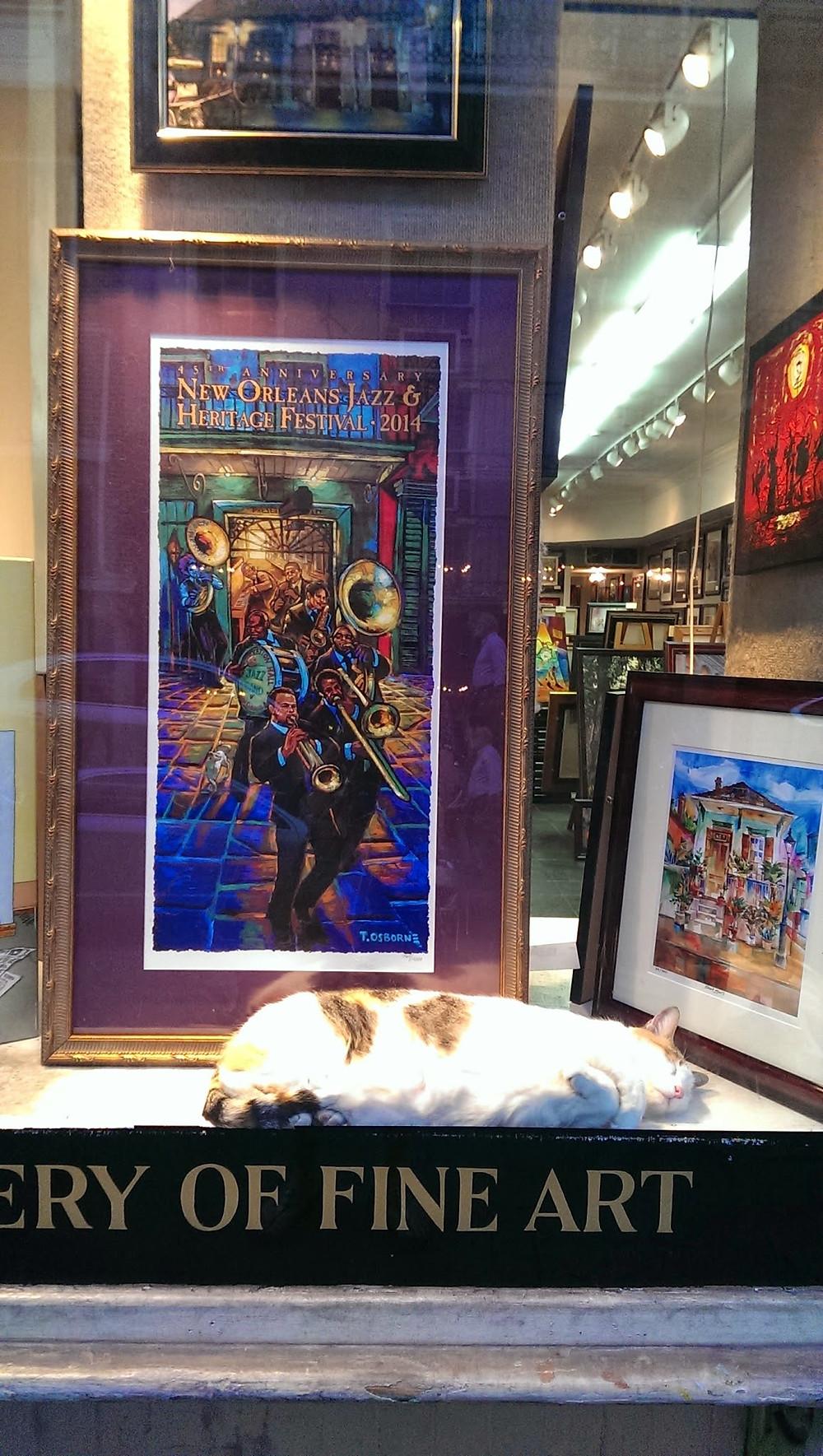 Cat Sleeping on Fine Art Shop window in New Orleans