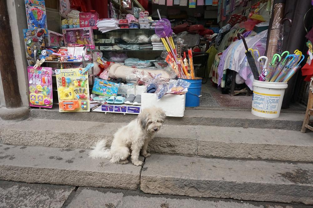 Dog, China