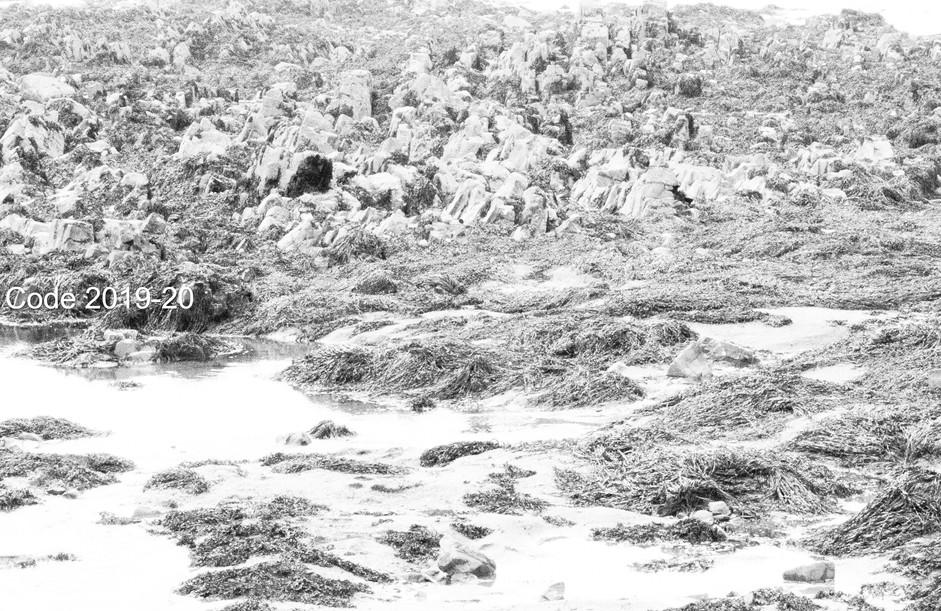 Seaweed and Rocks.jpg