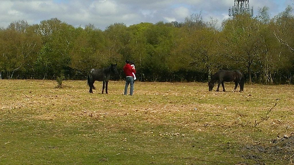 Wild Horses of New Forest