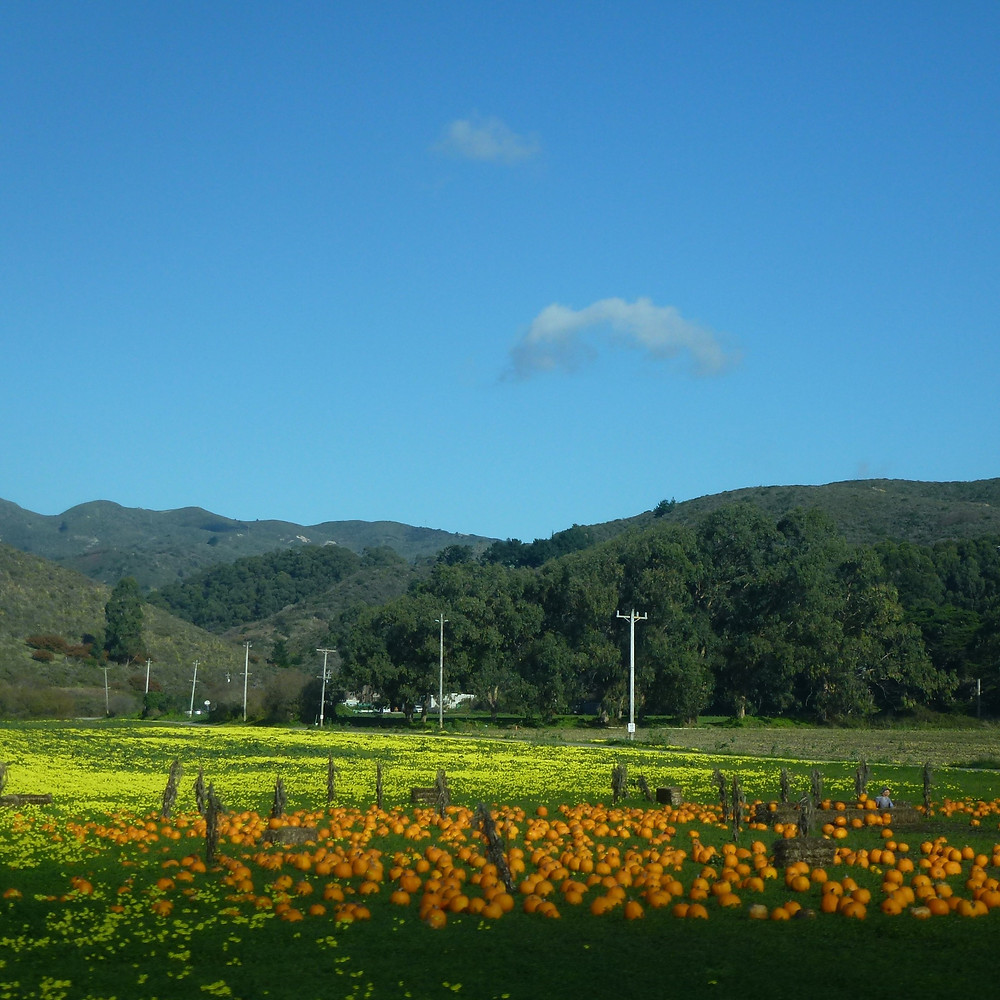 Pumpkins by the Pacific Coast Highway