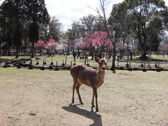 Nara, Japonya