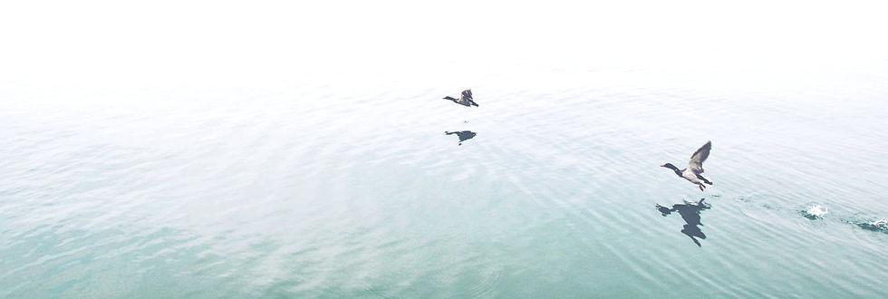 Ducks Over the Lake_edited.jpg