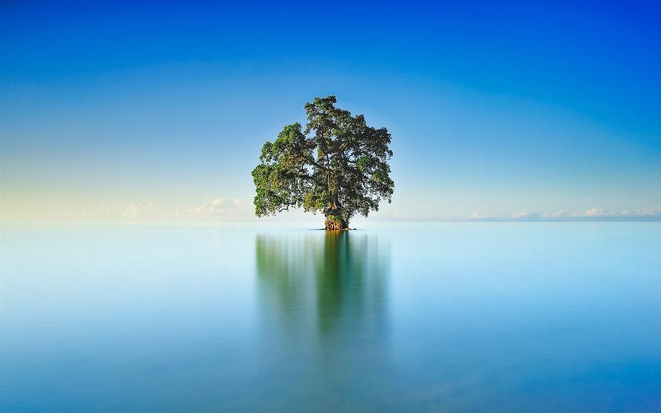 Lake-lonely-tree-blue-sky_1920x1200.jpg