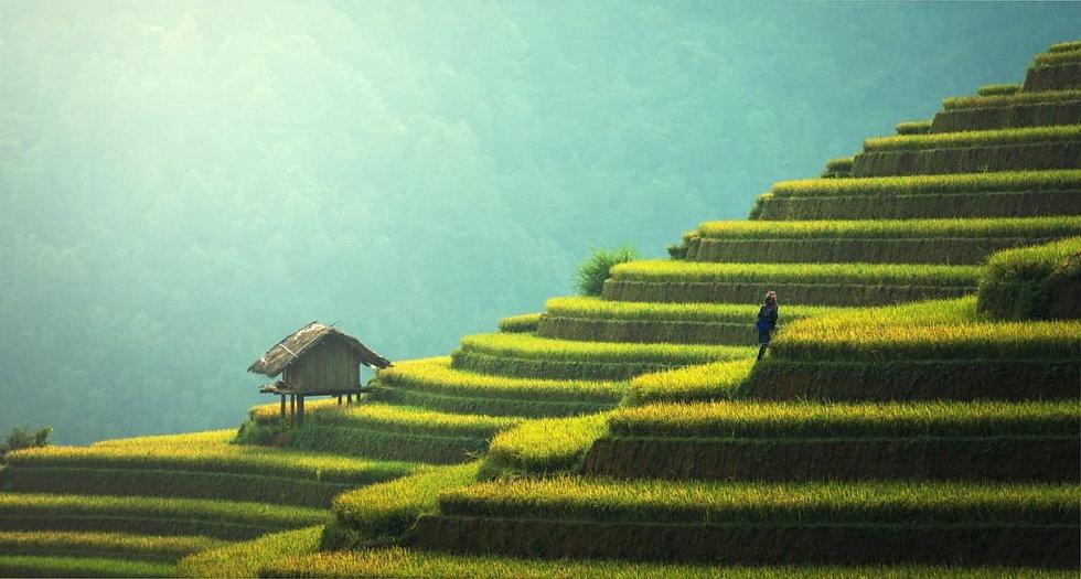 44-magnifiques-photos-de-rizieres-terrasse-13_edited.jpg