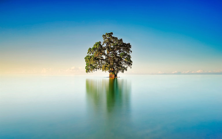 Lake-lonely-tree-blue-sky_1920x1200_edited.jpg