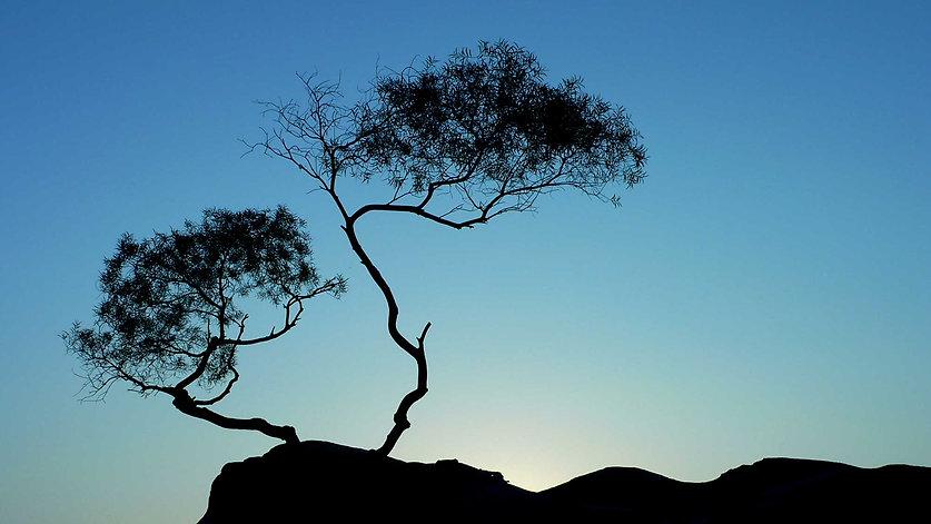 chinese-tree.jpg