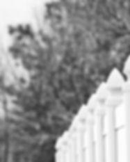 black-and-white-blur-branches-942469_edi