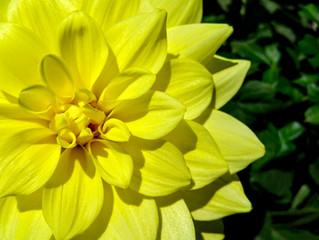 10 Perennials Beauties For An Exceptional Garden