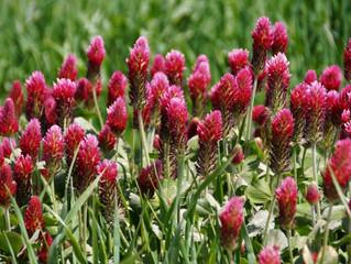 7 Plants That Enrich Your Garden Soil