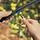 Thumbnail: 0.5 GPH Blue Emitter (5 Pack)