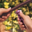 Thumbnail: 2 GPH Bug Emitter - Barb Inlet Blue (10 Pack)