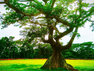 How many trees does it take to produce oxygen for one person?