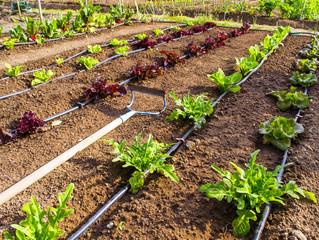 Simply Tips to Creating a Garden