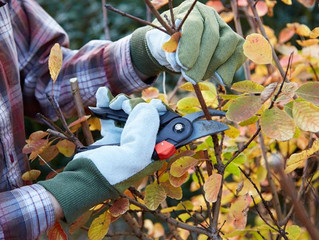 Why You Should Stop Pruning Your Garden in the Fall