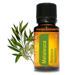 Melaleuca (Tea Tree) Oil
