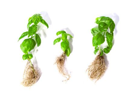 Pflanzen einfach vermehren