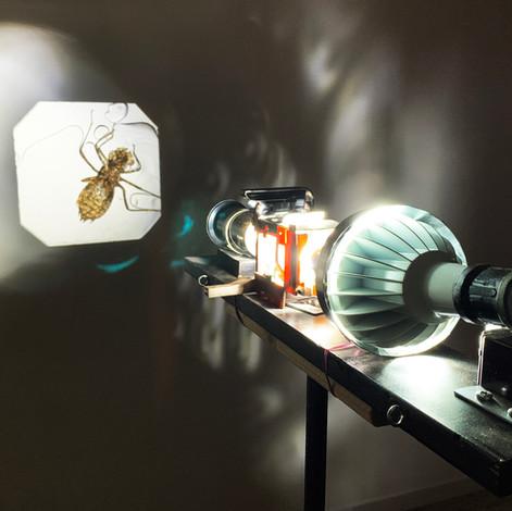 Apparatus-cicada