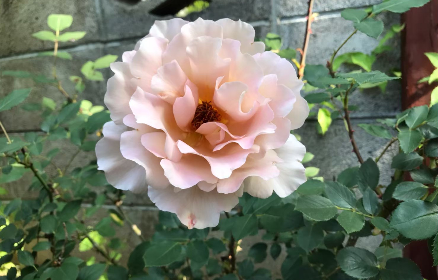 薔薇_201113_12.jpg