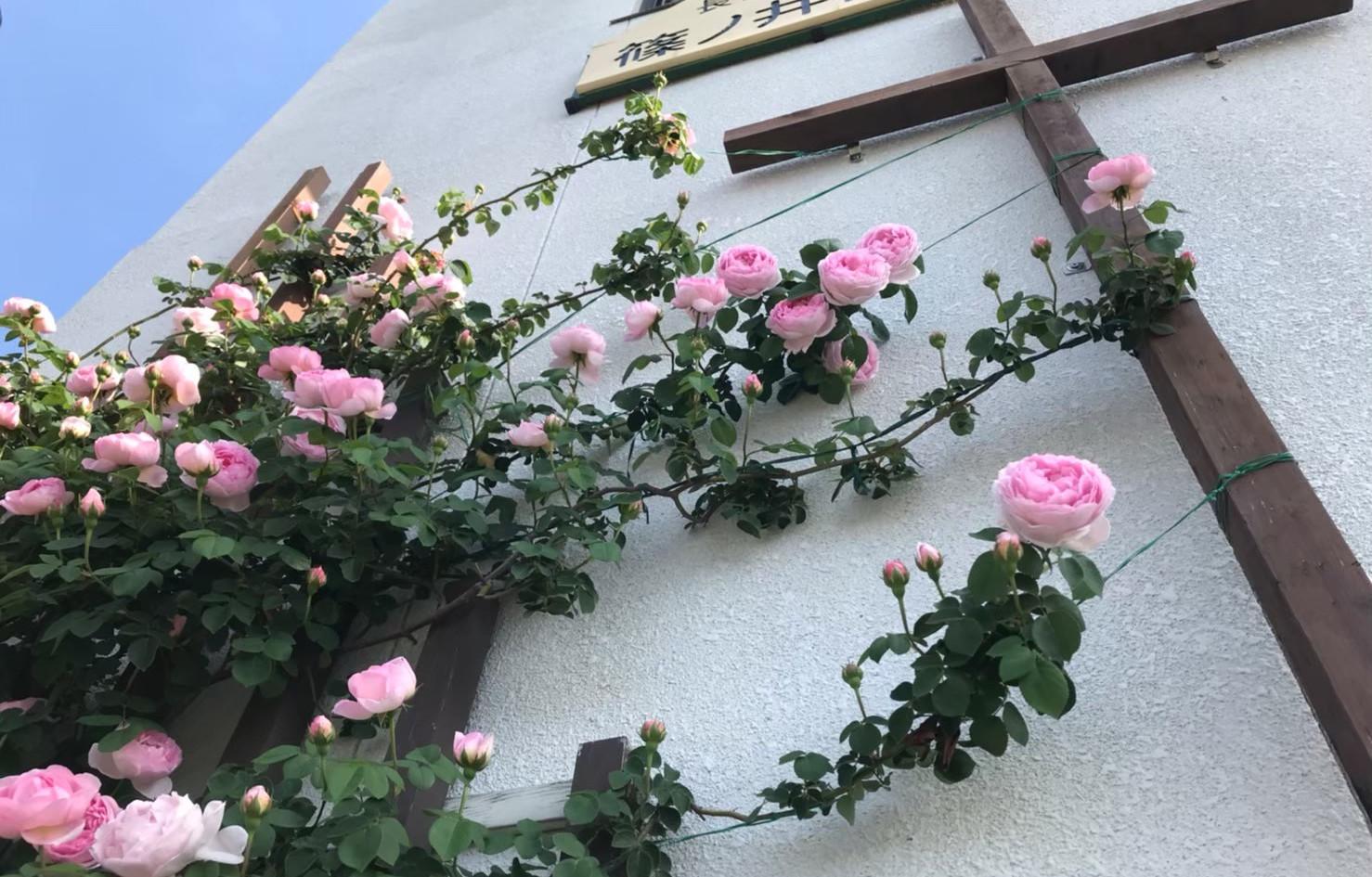 薔薇_201113_5.jpg