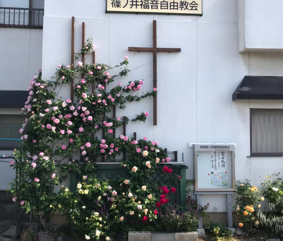 薔薇_201113_8.jpg