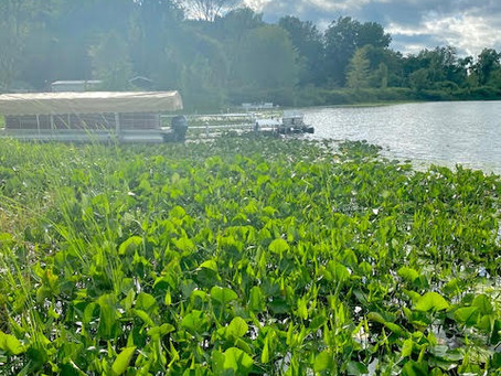 My Weekend at The Lake: An Ode To Black Generational Inheritance (Pt 1)