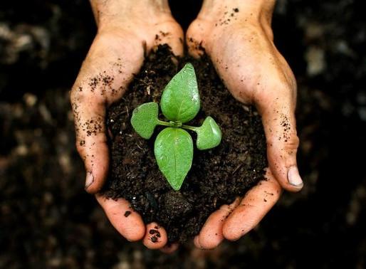 Plante uma árvore e tenha um futuro com muito mais saúde
