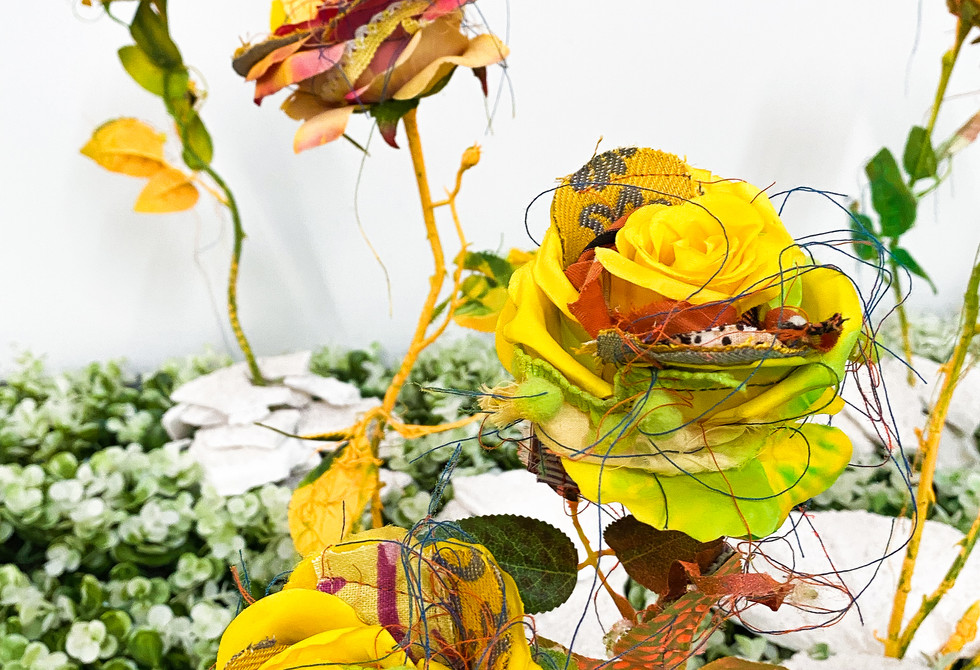 Sun Roses, closeup