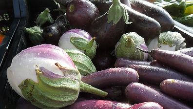 aubergine 01.JPG