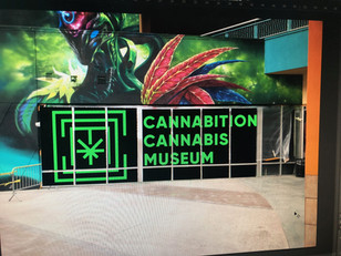 Cannabis Tourism Grows Up in America