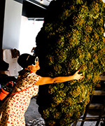 immersive cannabis museum opens downtown