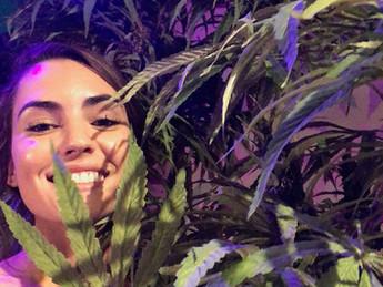 The Las Vegas Review Journal Features Las Vegas' Newest Cannabis Museum