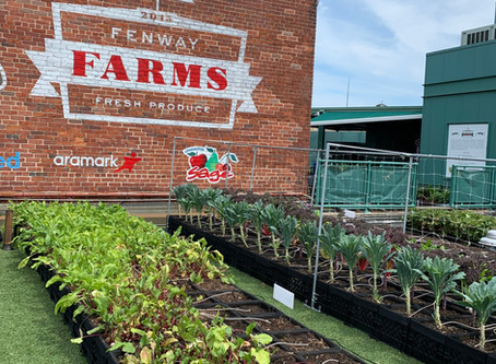Fenway Farms -  The Urban Rooftop Garden That Will Knock Your Sox Off!