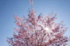 spring-733542.jpg