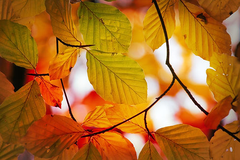 pixabay_leaves-3821710.jpg