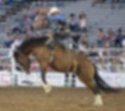 rodeo-3612846_640.jpg