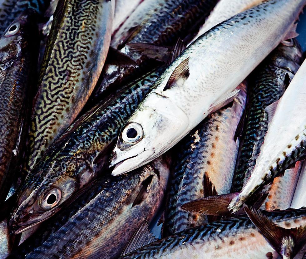 fish-min.jpg