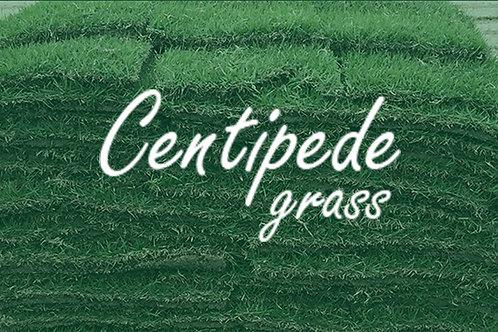 Full Pallet Centipede grass