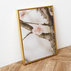 BlossomMockup-15.jpg