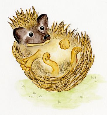 Stickly-Prickly Hedgehog
