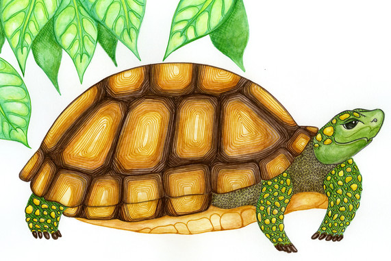 Character study of Slow-Solid Tortoise.