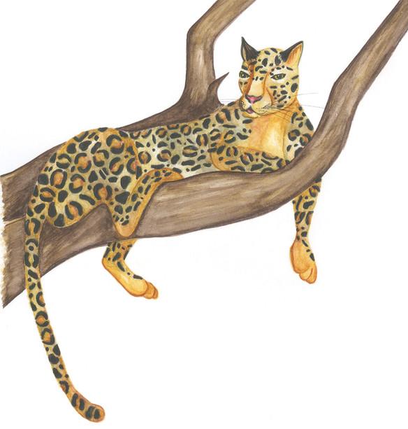 Mother Jaguar character study.