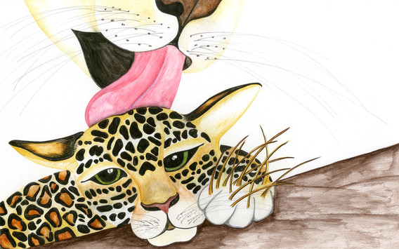 Mother Jag licking Painted Jaguars wounds.