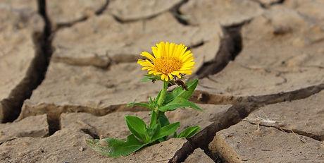 flower-887443_1920-1152x578.jpg