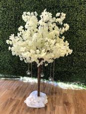 blossom-tree-hire.jpg